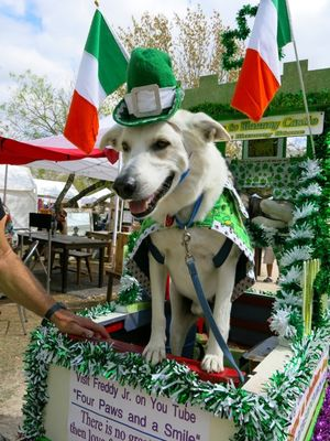 Leprechaun dog