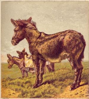 Vintage mule
