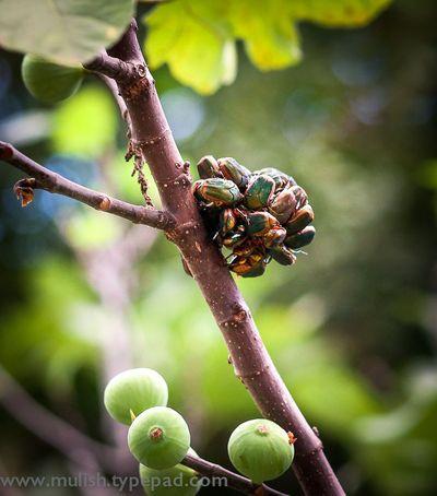 Beetlecluster