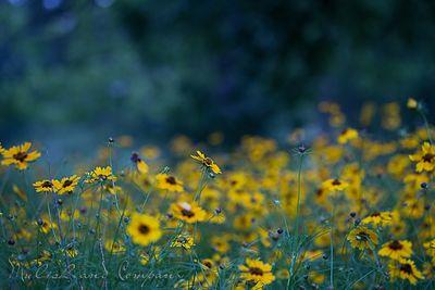 Wildflowersatdusk